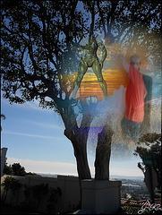 Tree with a view....Ben oui chacun sa vue :-))