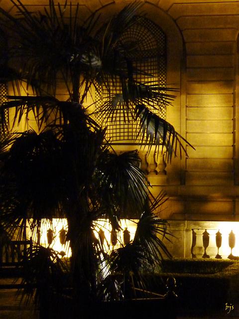 La nuit du palmier