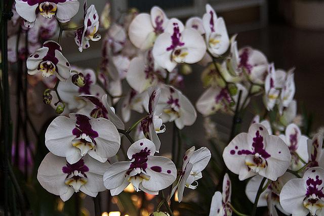 20120301 7275RAw Orchidee