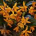 20120301 7273RAw Orchidee