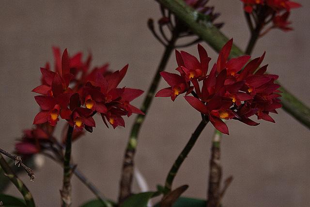 20120301 7262RAw Orchidee