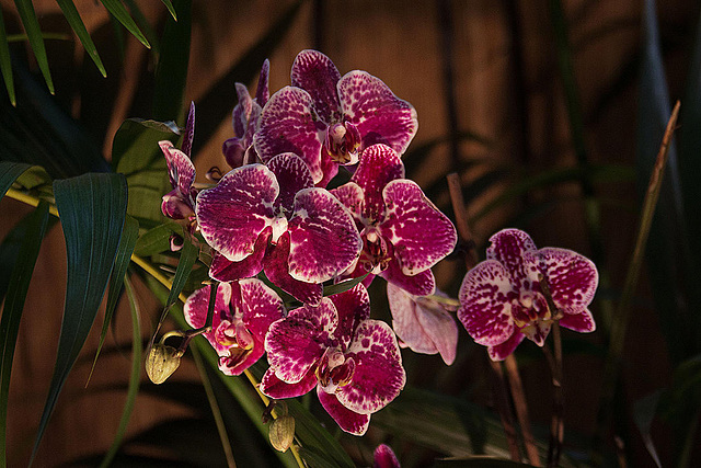 20120301 7260RAw Orchidee