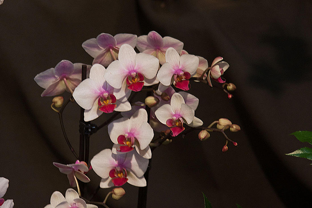 20120301 7255RAw Orchidee