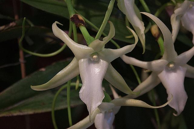 20120301 7251RAw Orchidee