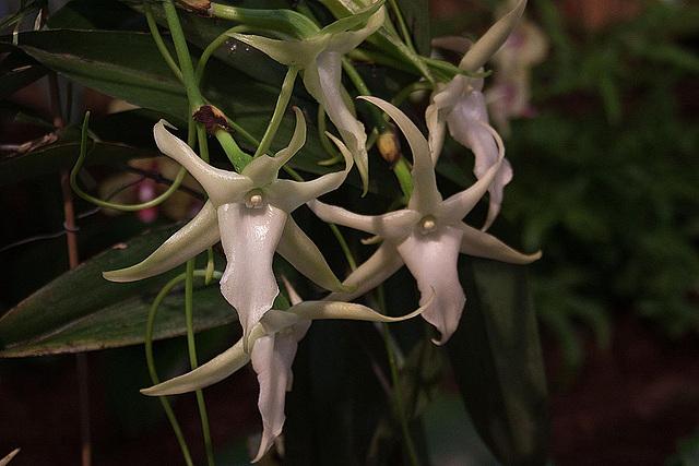20120301 7250RAw Orchidee