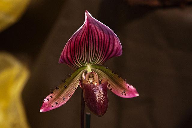 20120301 7249RAw Orchidee