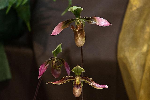 20120301 7248RAw Orchidee