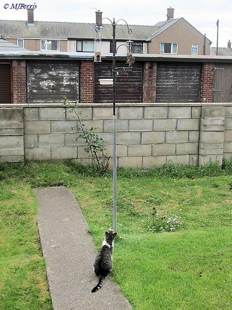 78  Zazzles bird watching