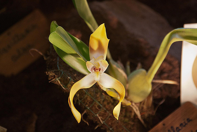 20120301 7237RAw Orchidee