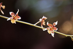 20120301 7236RAw Orchidee