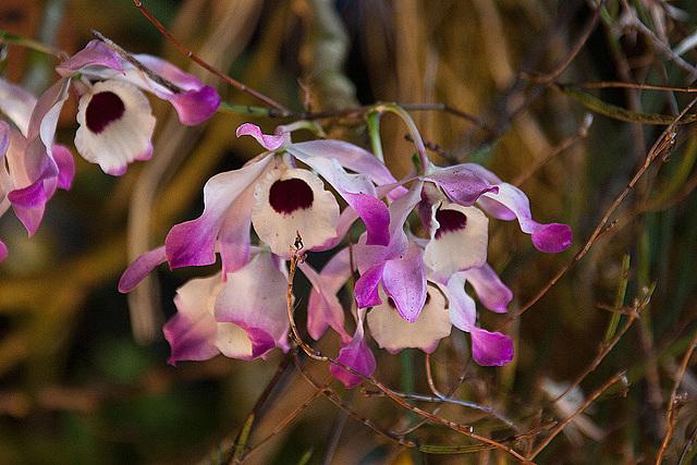 20120301 7235RAw Orchidee