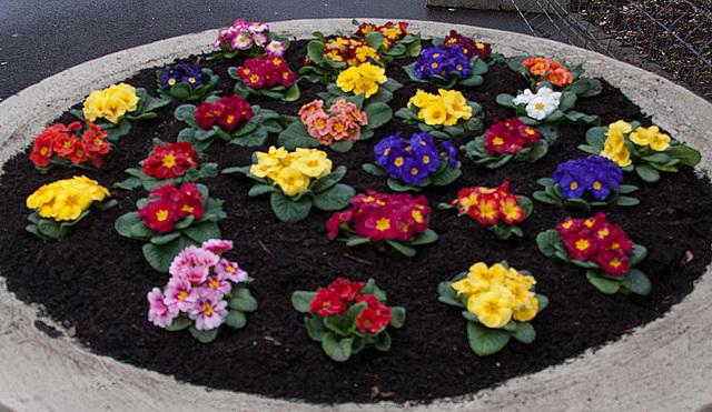 20120301 7232RAw Blumenkübel