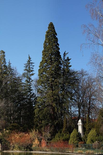 Jardin Vinay - Sequoia géant