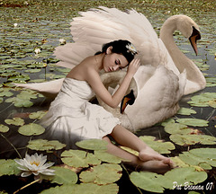Woman of Swans