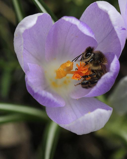 Bee free ...
