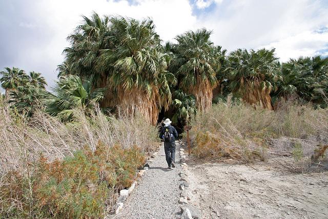 San Andreas Oasis (3455)