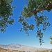 Mt San Jacinto (2971)