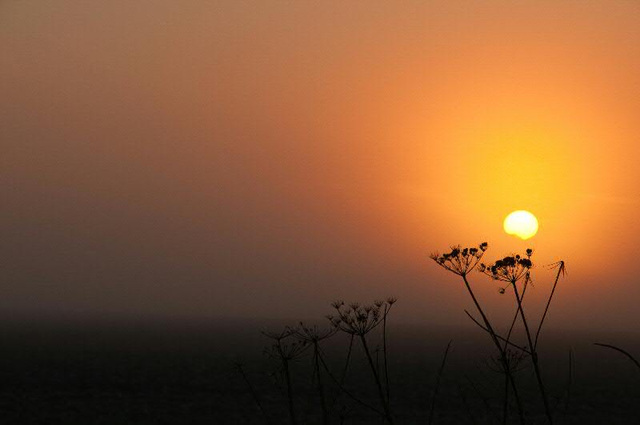 sun emerges from the mist
