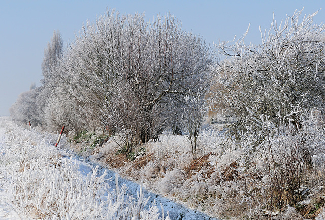 Frosty morning (c)