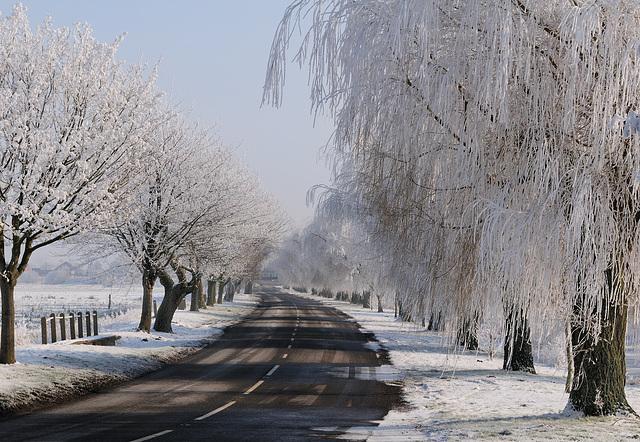 Frosty morning (e)