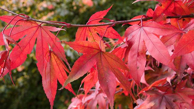 Autumn Study II