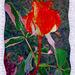 IMGP0425 rose rouge cadre