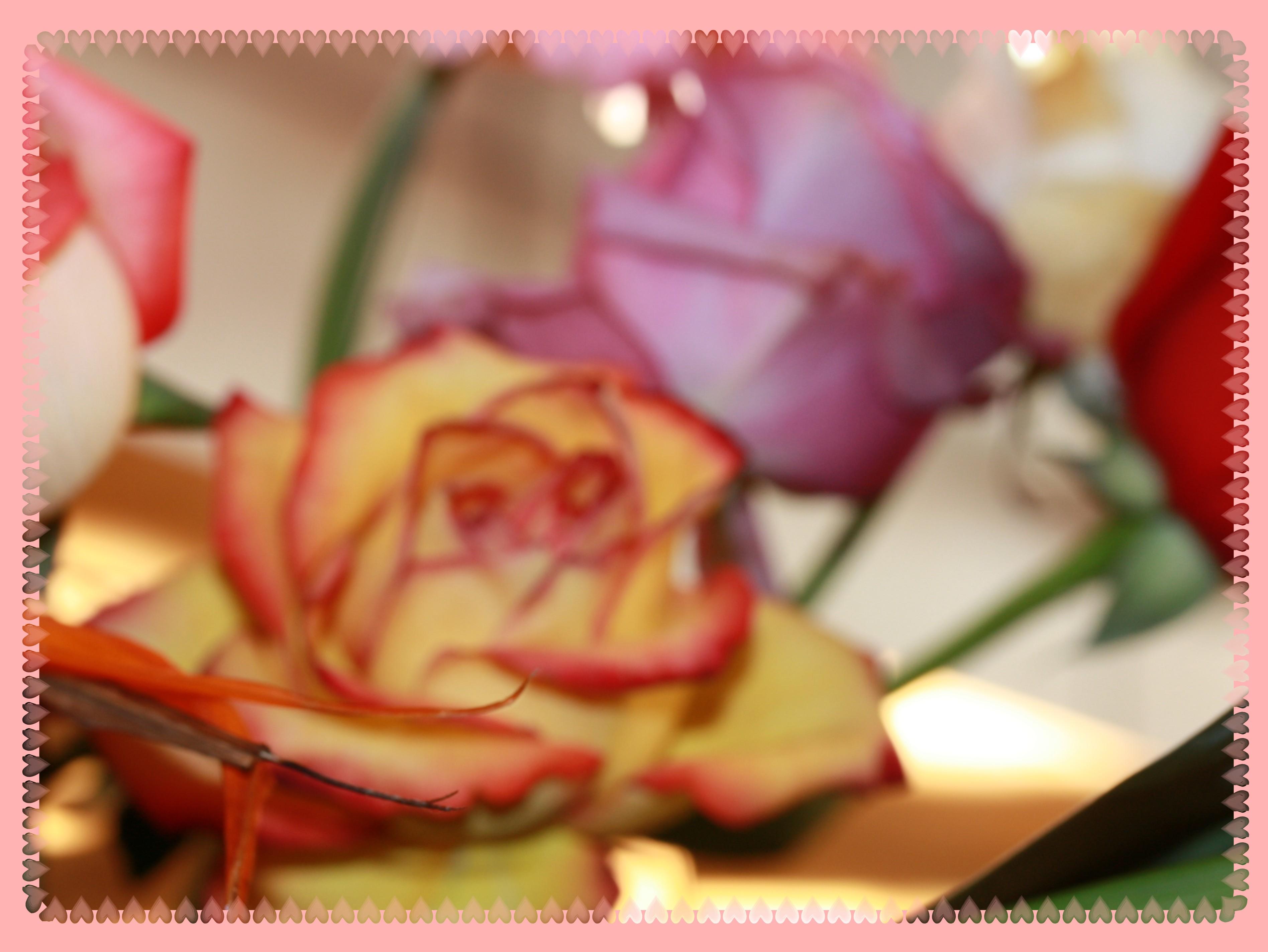 IMG 9362 roses