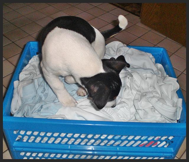 Wäschekontrolle
