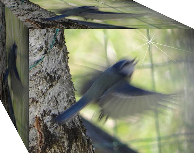 Ouvrez la cage aux oiseaux ....