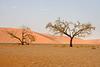 Namib Dawn