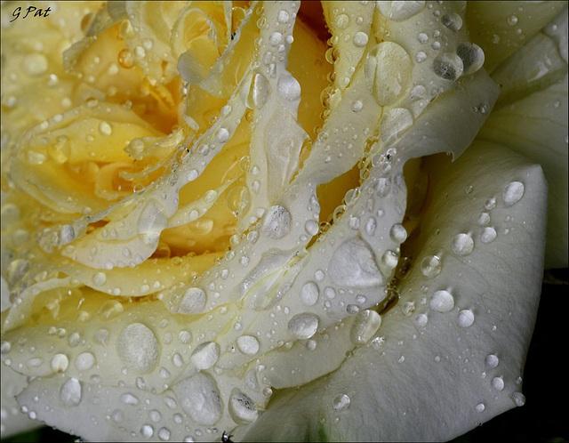 Pearl rain