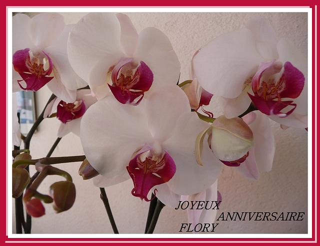 Orchidee Joyeux Anniversaire Motortrends