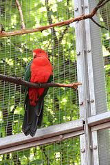 farbenprächtiger Papagei