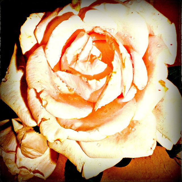 May. The month of the roses.