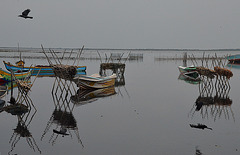 Mannar fishing boats