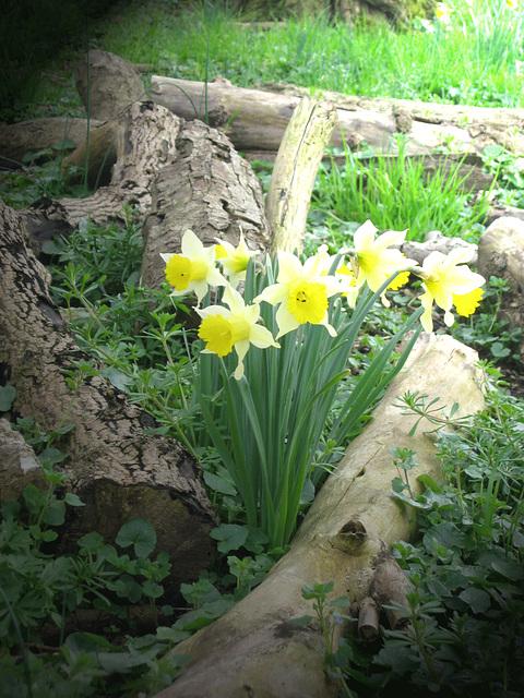 C'est le printemps ! ! !