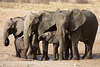 Pachyderm Family Outing
