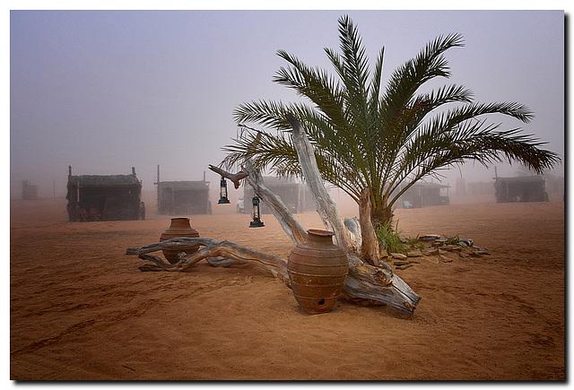 Wüstencamp morgens, ever green {:o)