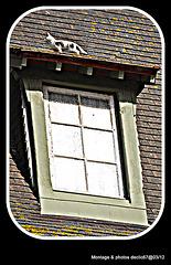 Un chat sur le toit !