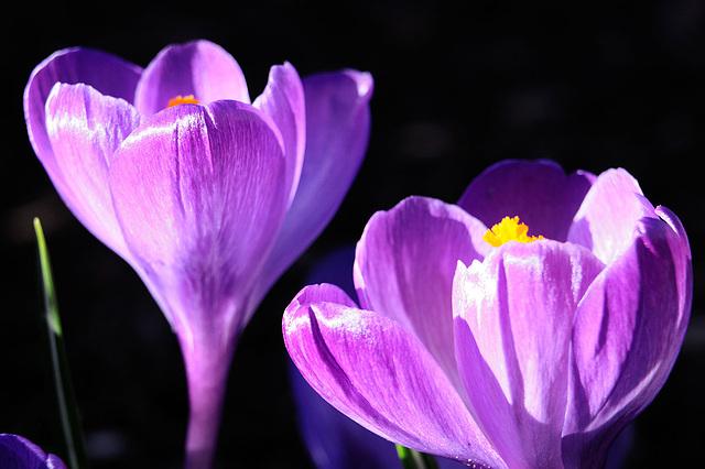 Frühlingsfarbenspiele