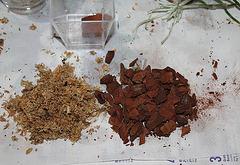 Sevrage d'un keiki de Dendrobium et rempotage (10)