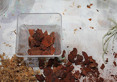 Sevrage d'un keiki de Dendrobium et rempotage (11)