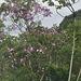 DSC 0029 arbre à fleurs violettes, nom ?