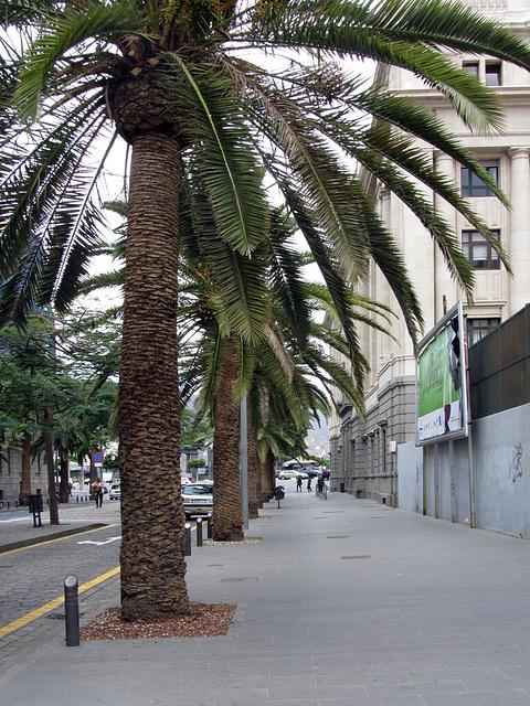 IMG 4605 Santa Cruz