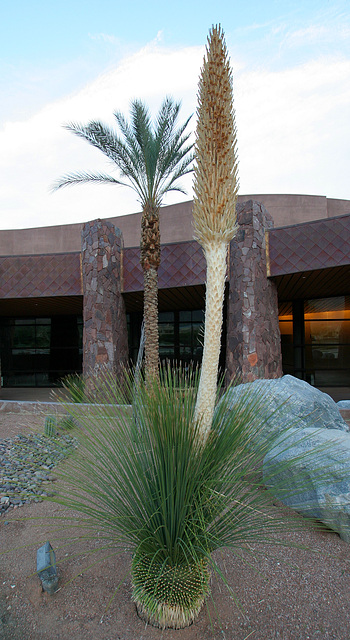 Palm Springs Convention Center (2887)