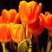 Frühlingsgefühle 2