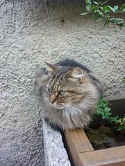 A Carcassonne ...Un chat