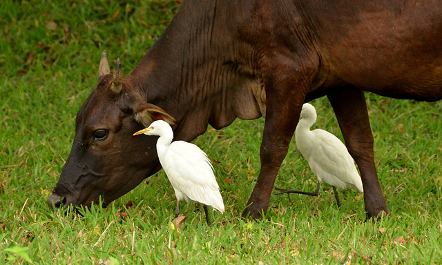 cow birds and other relationship advice