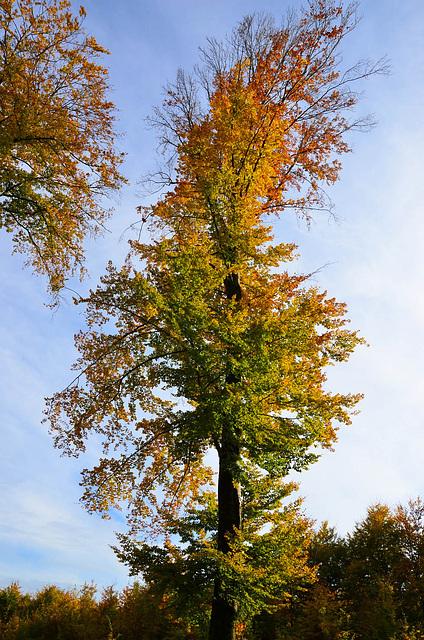 Sur ciel d'automne...