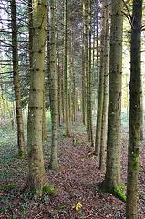 En forêt...bien alignés...